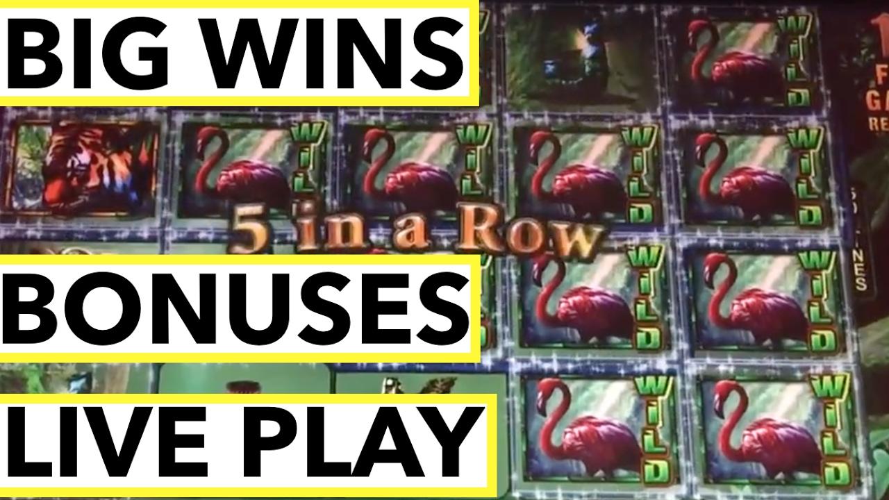 jungle riches slot machine